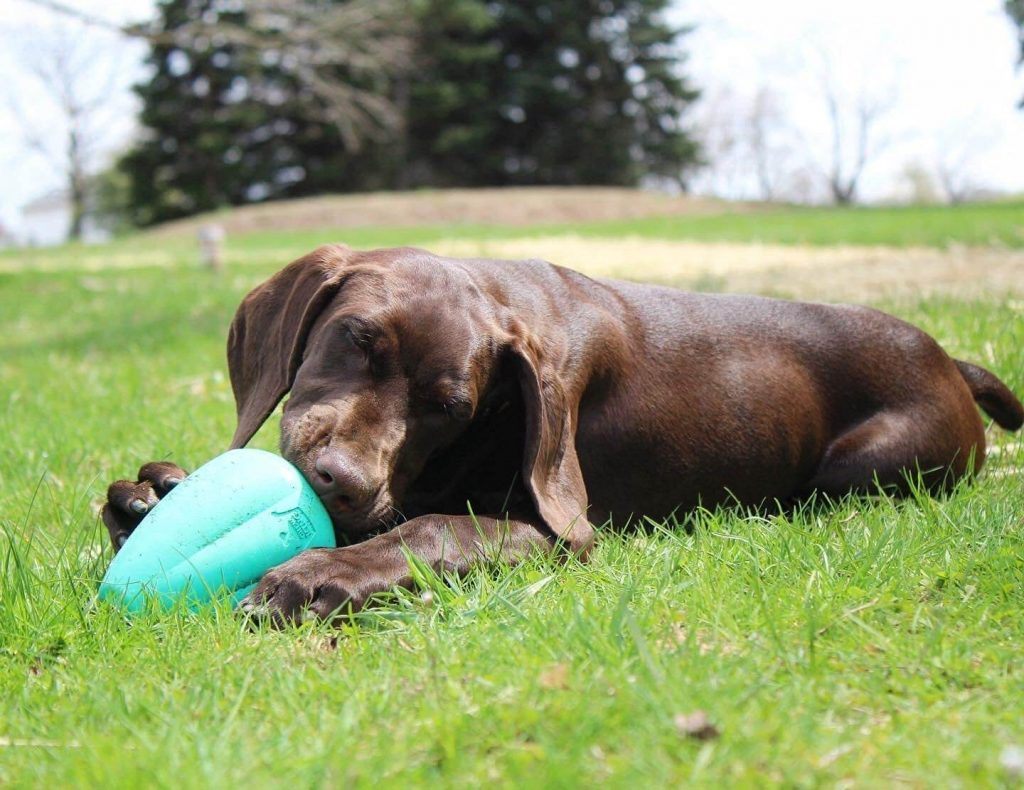 chewy tooth toy online 2021