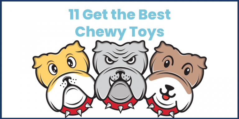 best chewy toys online 2021 internetbloggy.com